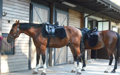 Customize Golf Carts for Stables and Horse Owners